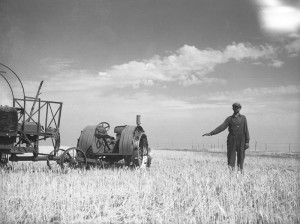 A farmer holds out his hand to represent how high the wheat should be in a field. Grant County, North Dakota. July 1936.