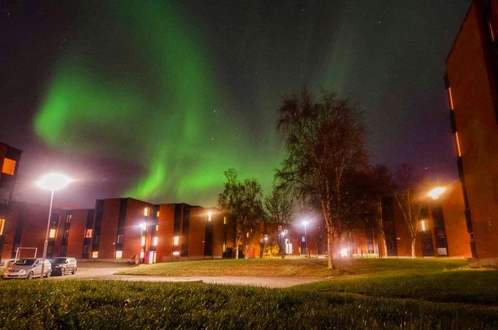 Aurores boréales en plein centre de Moholt Studentby – le village étudiant dans lequel de nombreux internationaux résident.